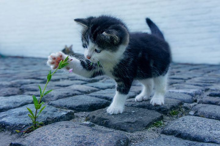 cat-2536662__480.jpg