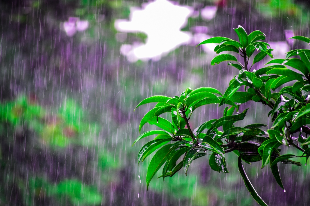 Canva - Selective Focus Photo of Obalte Green-leafed Plants during Rain.jpg